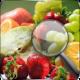水果找茬安卓版10.0.0